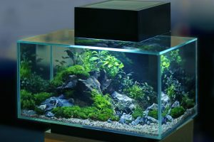 How To Remove Scratches From Aquarium Glass