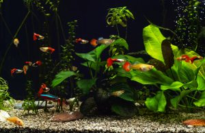 how to prevent fish from getting stuck behind filter