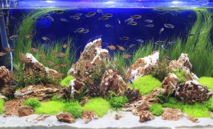 how to get scratches off fish tank
