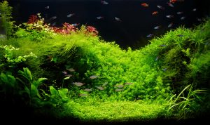 how to heat a fish tank without power