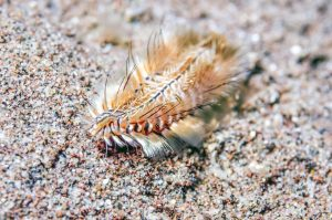 How to get rid of bristle worms
