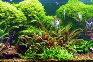 how long should aquarium lights be on?