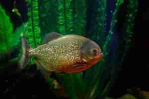 creepy freshwater aquarium fish