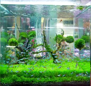 how to restore fish tank glass