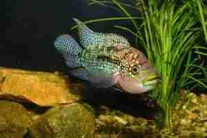 carnivorous fish examples