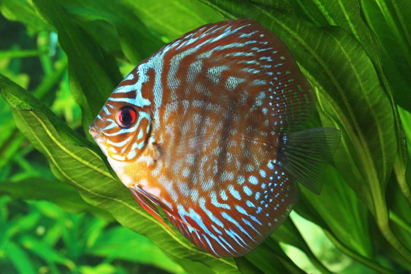 alternative fish food