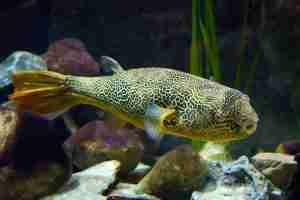 aggressive carnivore fish