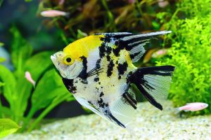 How To Oxygenate A Fish Tank Without A Pump