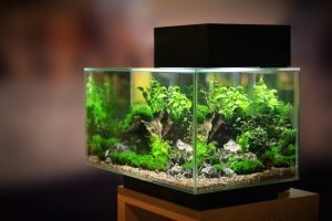 How to sterilize a fish tank and equipment
