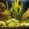 how to prepare rocks for an aquarium