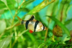 how to lower alkalinity in fish tank